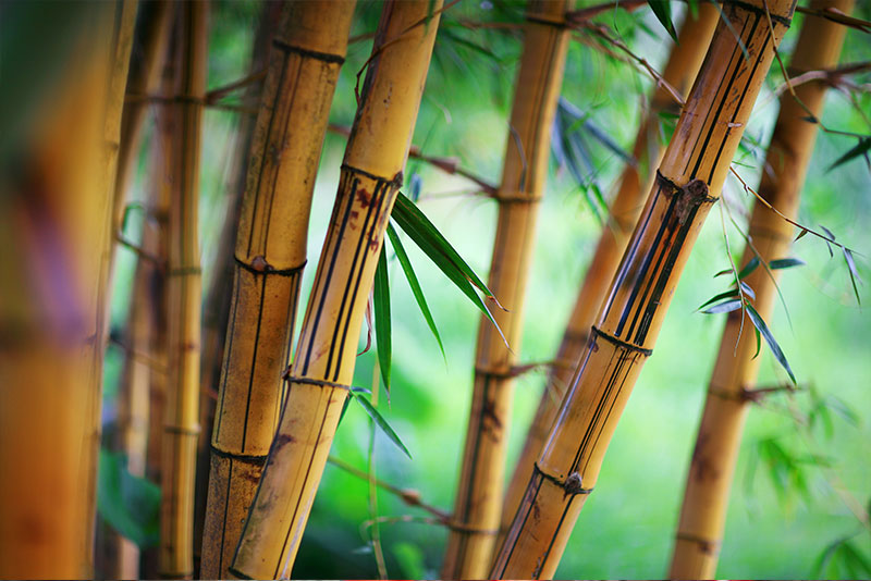maquillaje con bambú